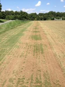 Fraze Mowing Bermudagrass Day 1