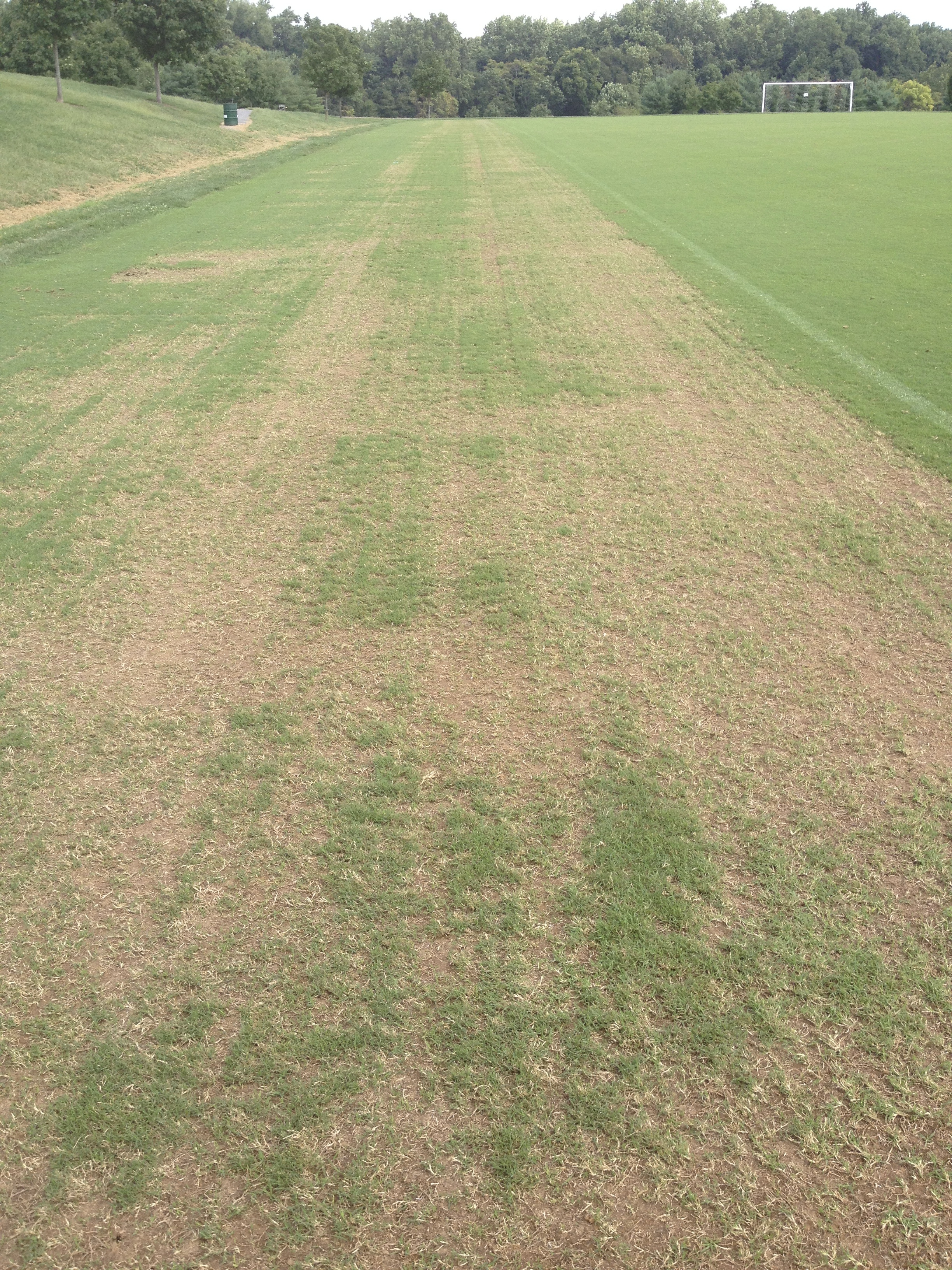 Fraze Mowing Bermudagrass Summary Of A New Concept