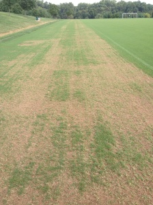 Fraze Mowed Bermudagrass Day 4