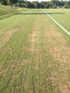 Fraze Mowed Bermudagrass Day 8