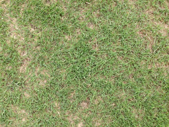 Bermudagrass Re-Growth at Day 24