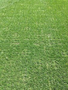 Post Cross Tine Aeration:  Flooring Feet Showing Slightly:  April 29