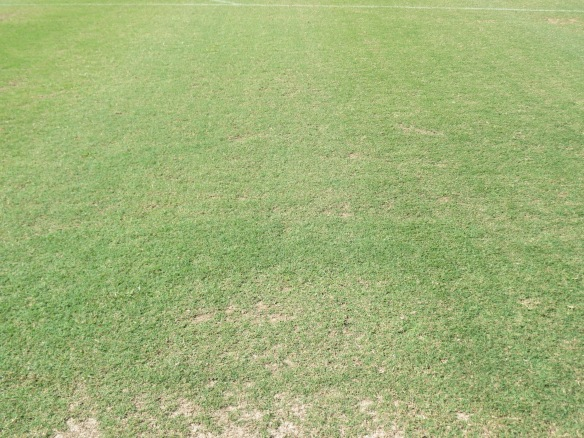 Day 14 of Recovery:  Fraze Mowed Field from 34 Lacrosse Matches (W/ Soccer Camps/ Clinics All 14 Days)