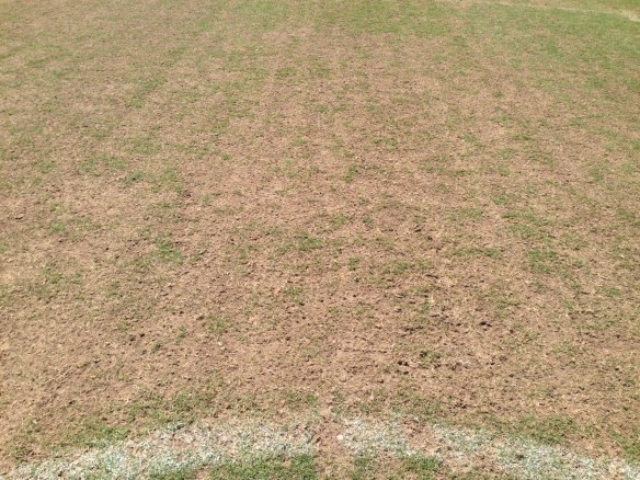 Bermudagrass Field That was Not Fraze Mowed