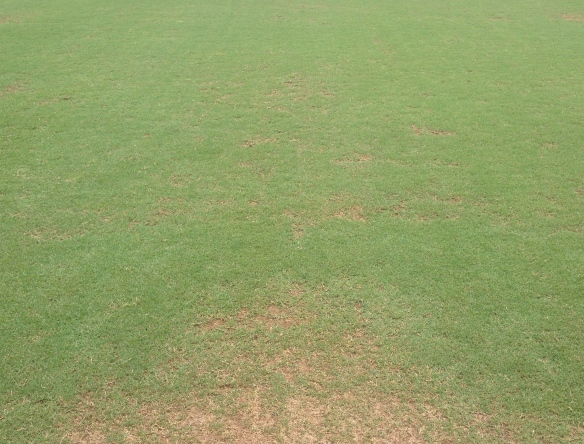 Day 7 of Recovery on Fraze Mowed Field