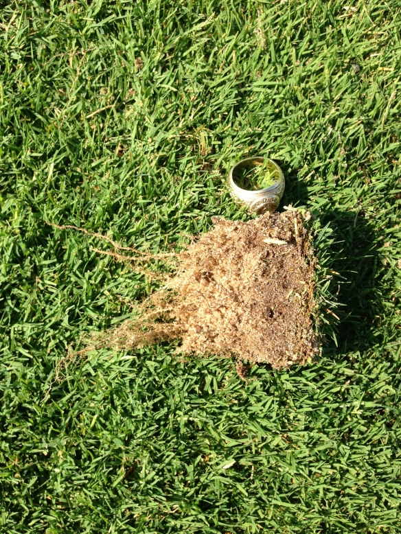 Thatch/ Organic Build Up AFTER Fraze Mowing in 2013
