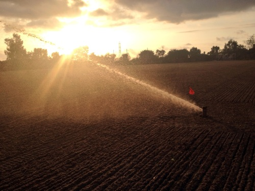 Sun Setting As Seeding of Ryegrass Progresses