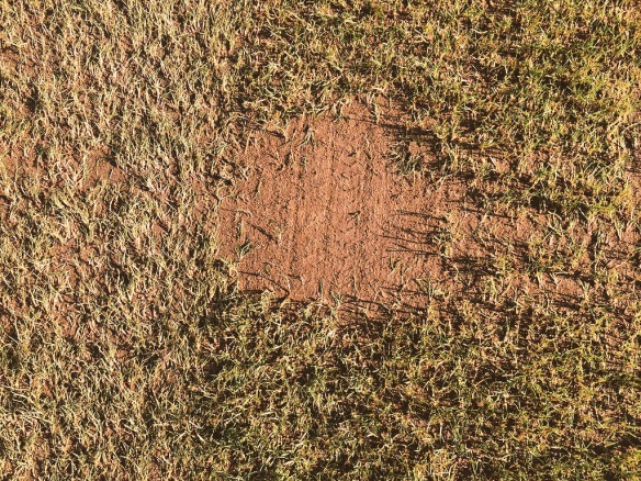 Poa Annua Patch Removed
